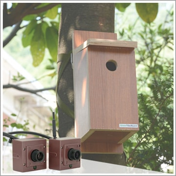 How to choose a best bird box camera for your birdhouse.