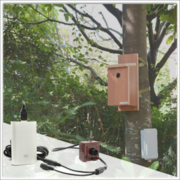Choose Battery Powered or Solar Panel for Wireless Bird Box Camera?