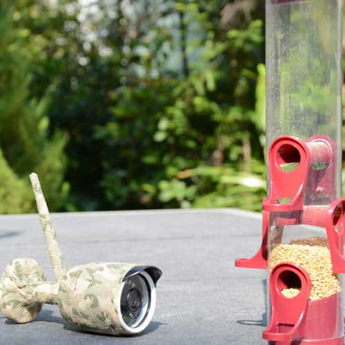 IP Bird Feeder Camera - Green Backyard